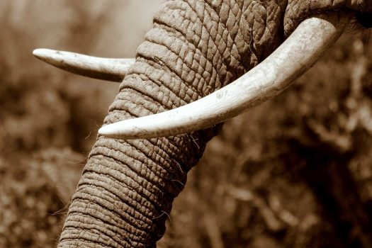 a_elephant