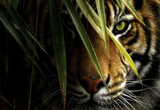 Tiger-Hiding-Desktop-Wallpaper